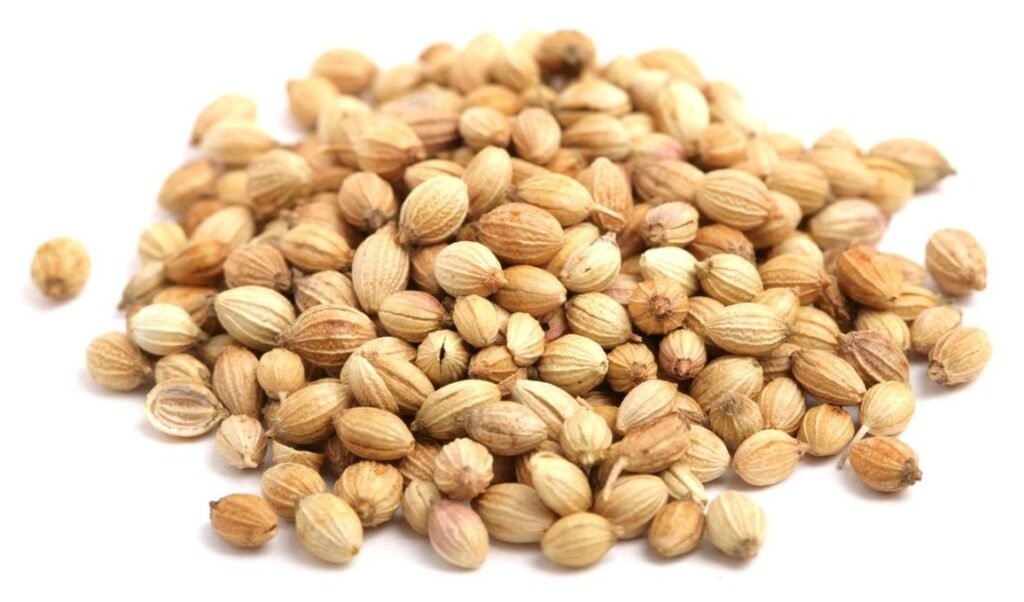 coriander seeds spice